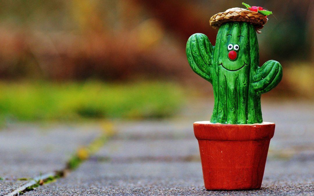 Leesett a kaktusz!