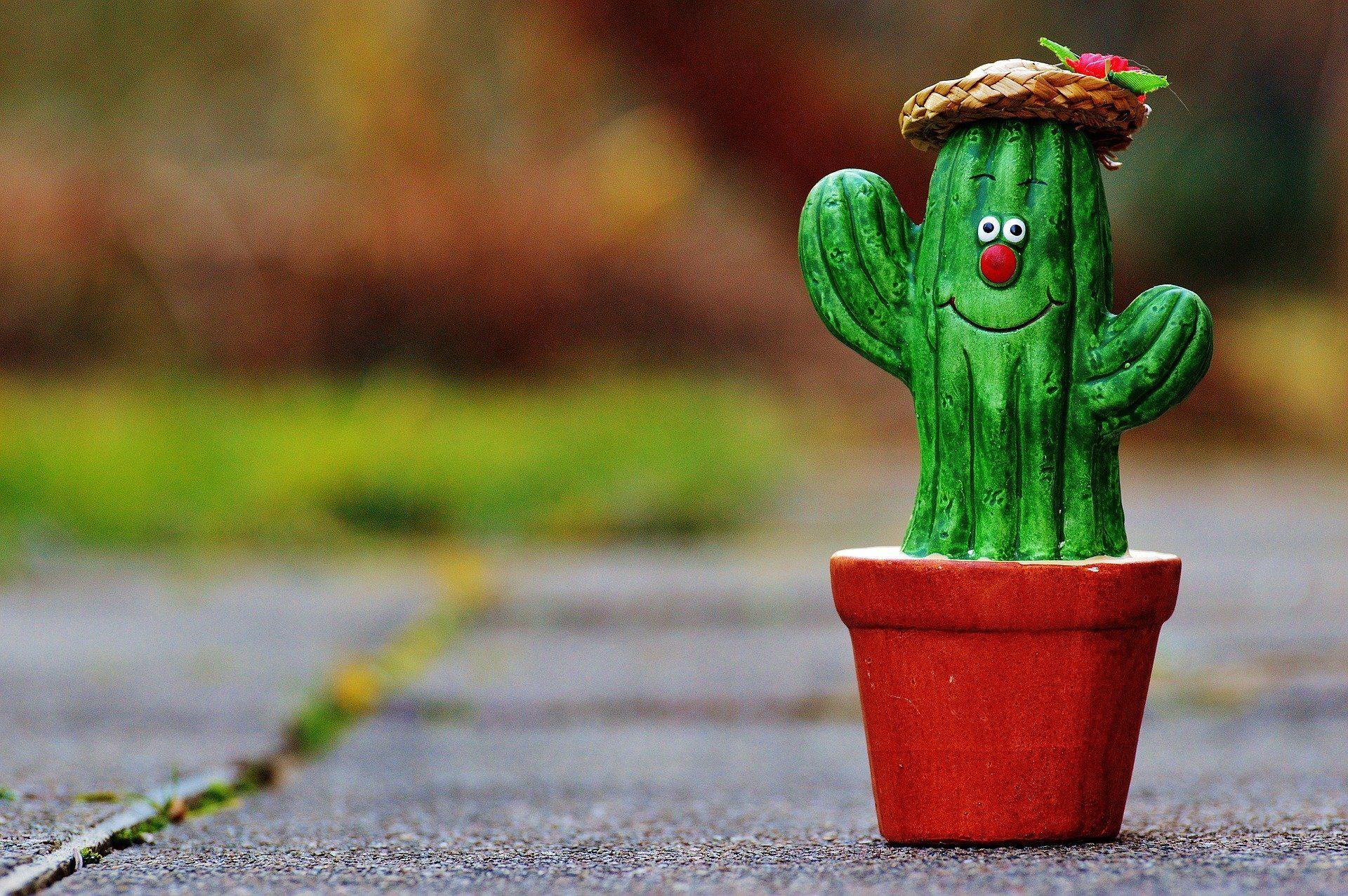 leesett-a-kaktusz